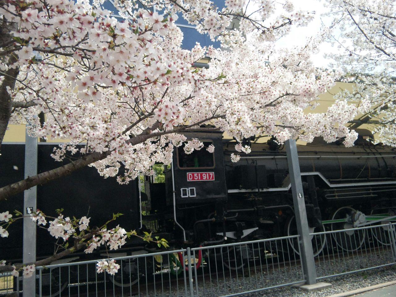 桜とデゴイチ