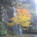 滝with紅葉