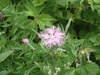ibuki_flower1